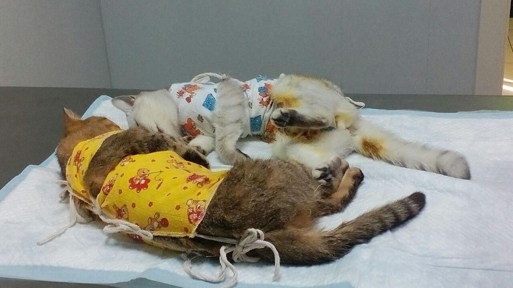 Альтернативой похоронам кошки является кремация
