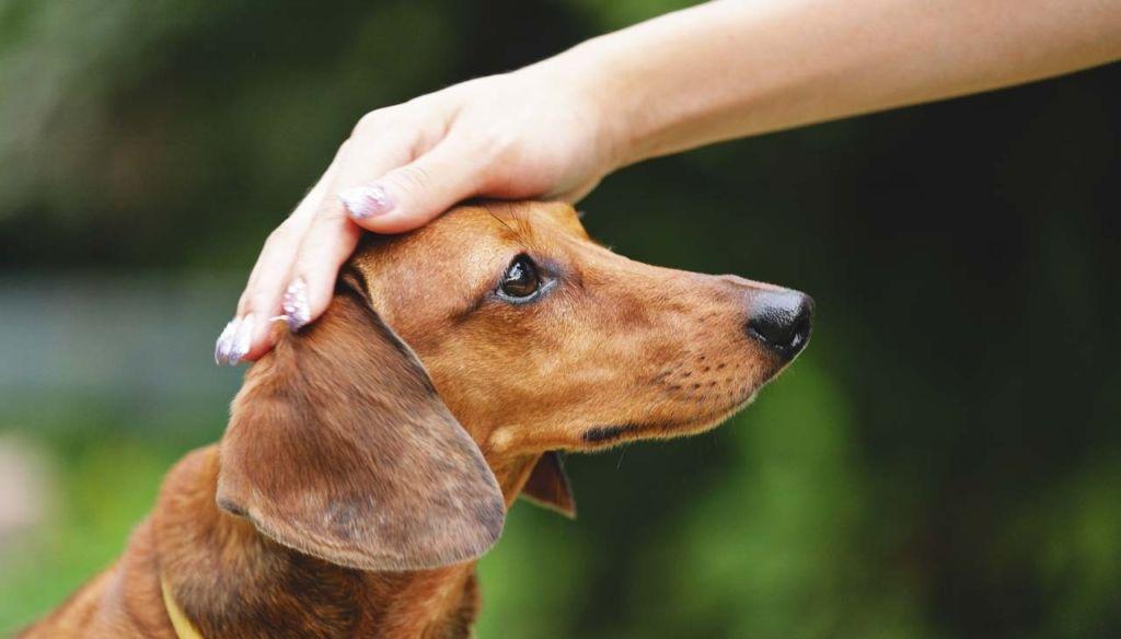 Подробная инструкция по применению препарата золетил в ветеринарии