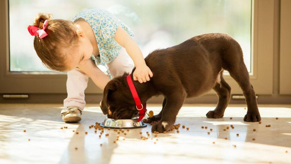 Почему собака не ест, плохо ест или вообще отказывается от сухого корма