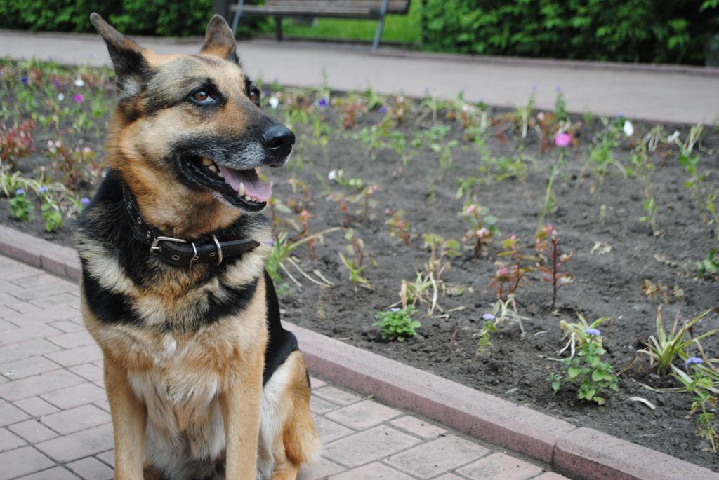 Что делать если пропала собака и полезные советы по поиску