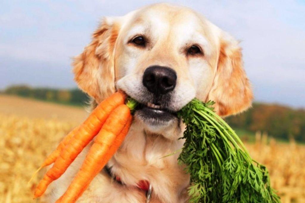 Что такое мясокостная мука для собак