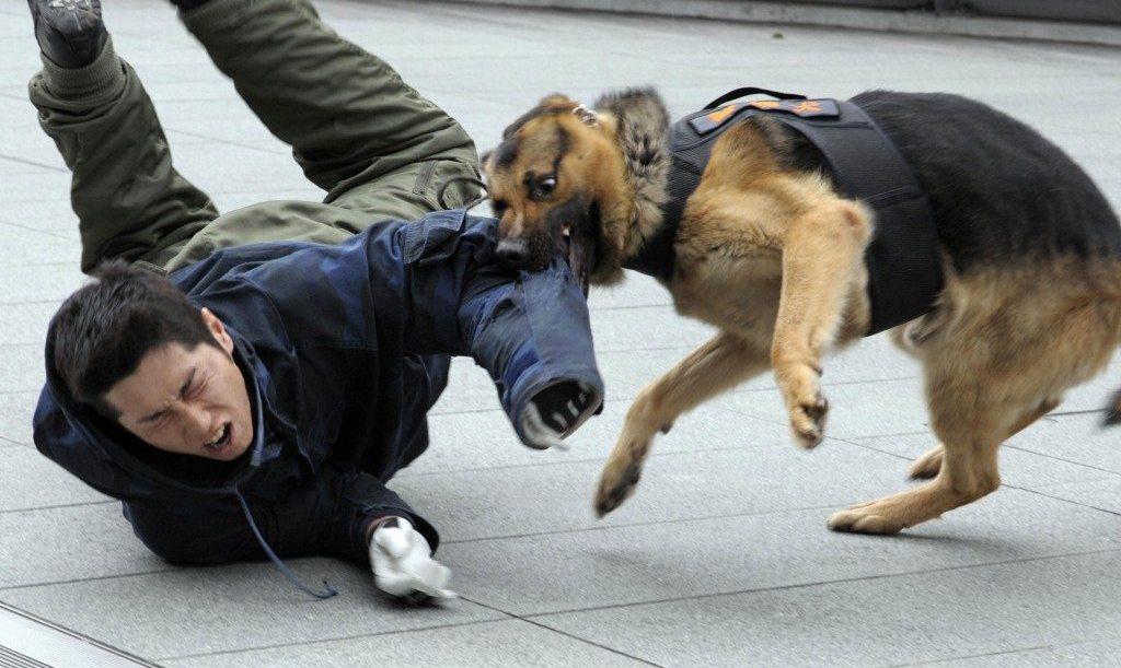 6 распространенных причин нападения собак на людей и как избежать атаки