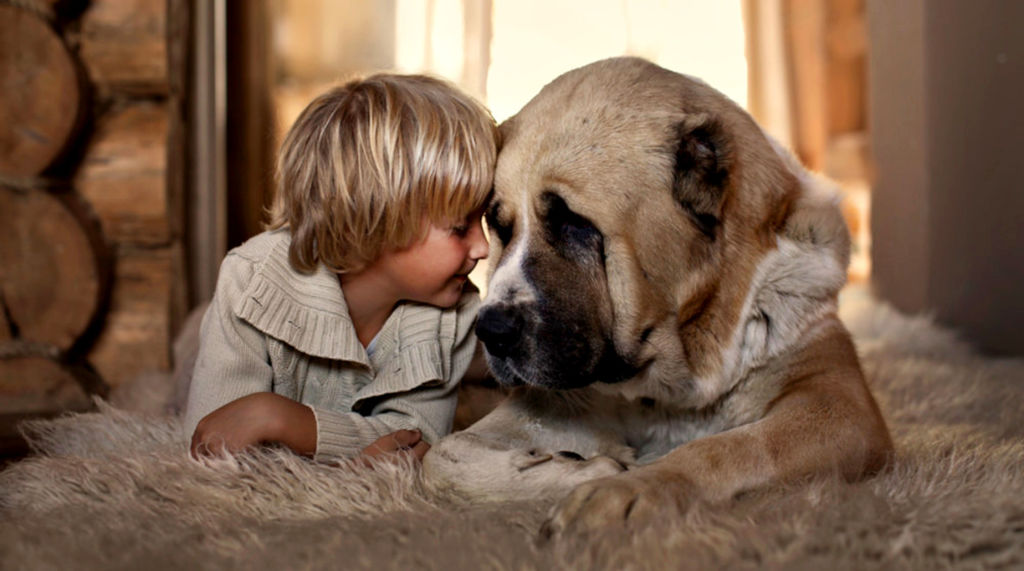 Сколько спит и сколько должна спасть собака в сутки