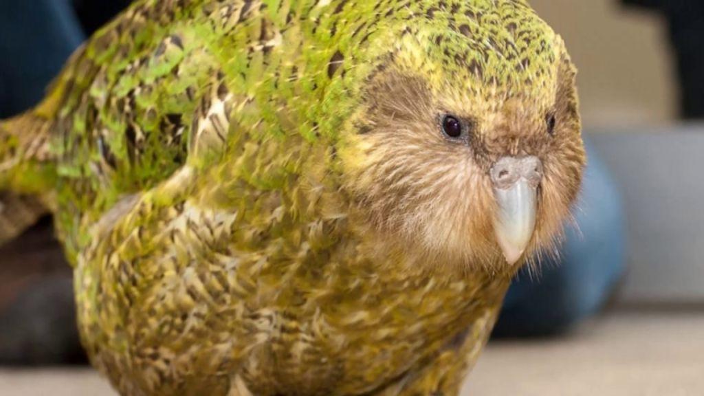 Большую часть жизни, птицы находятся на земле