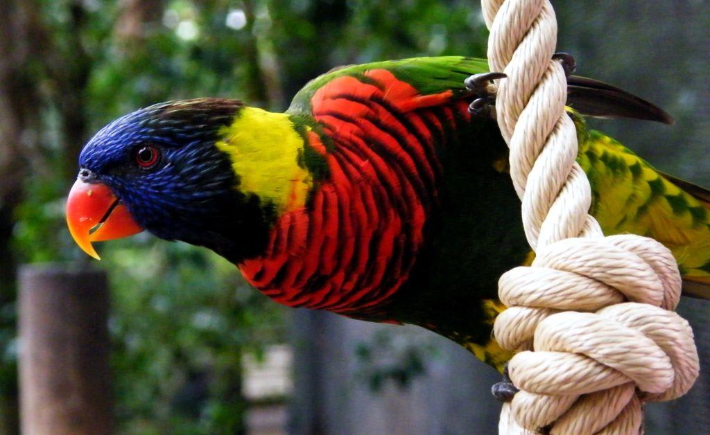 12 самых красивых и редких попугайчиков в мире