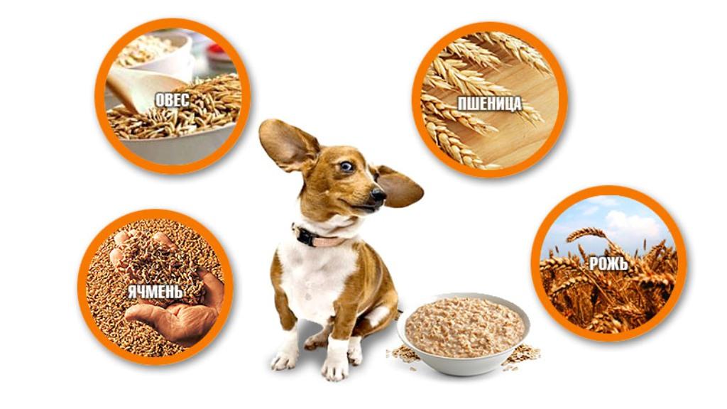 Крупы, которые можно давать собаке