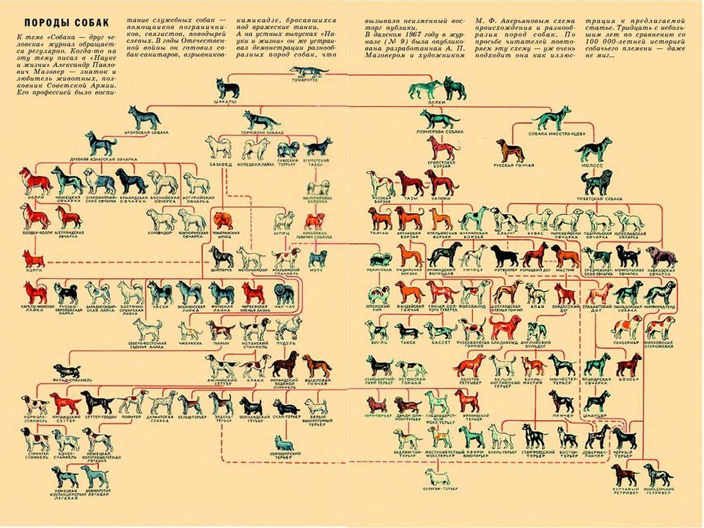 Происхождение и классификация существующих пород собак