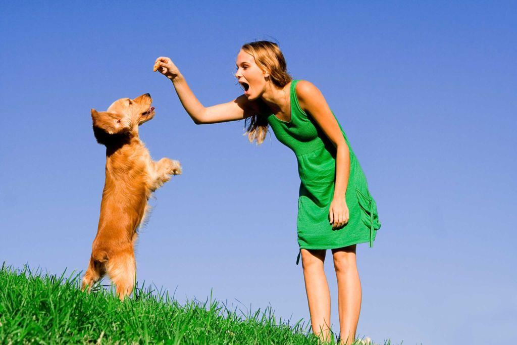 Дрессировка собак фас