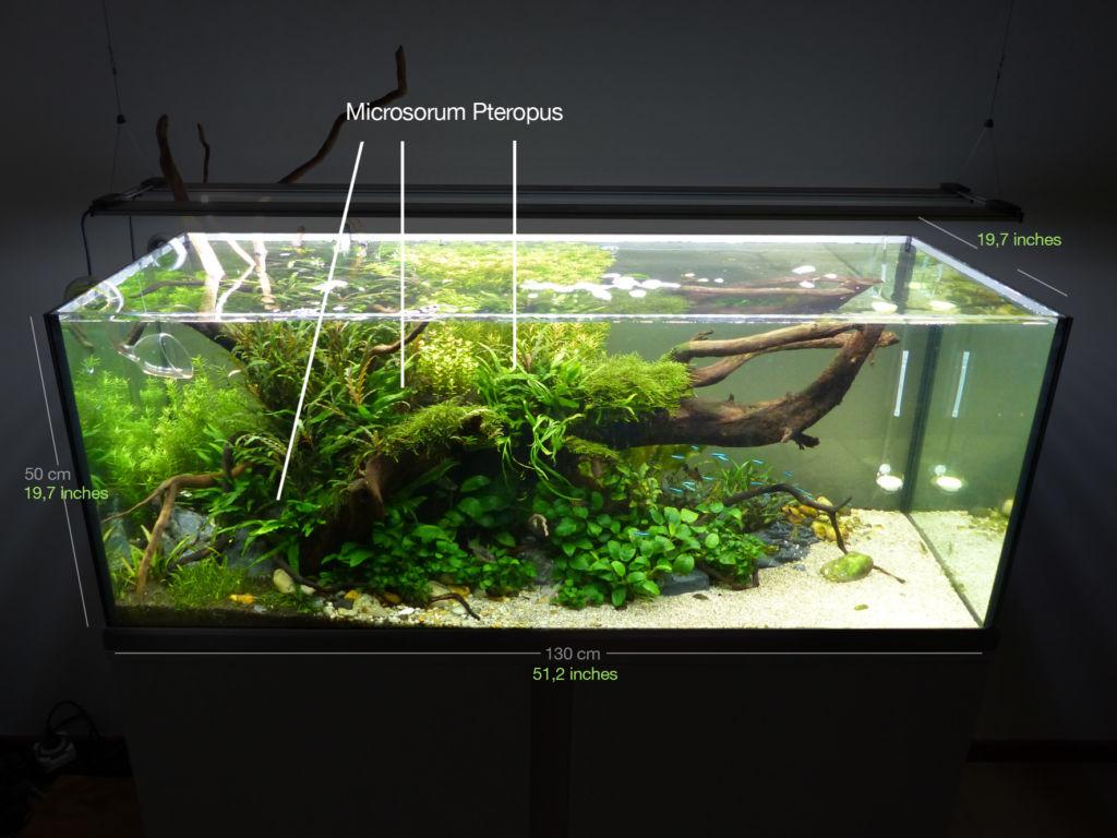 Желательное размещение папоротника в аквариуме