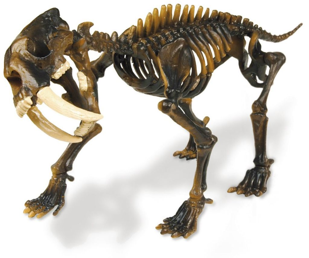 Макет скелета саблезубого тигра