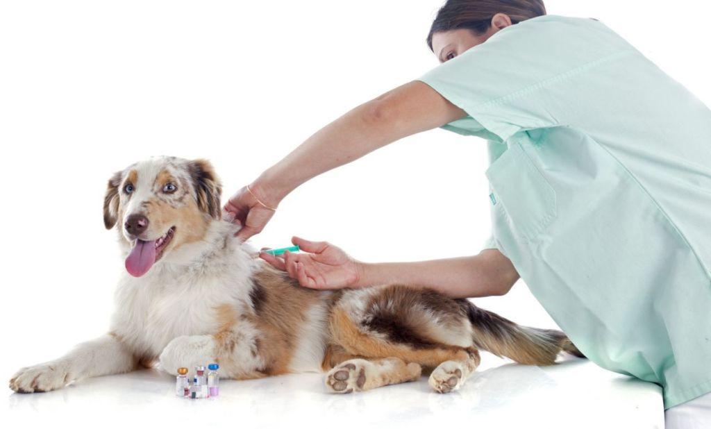 8 видов вакцины нобивак и инструкция по применению для собак