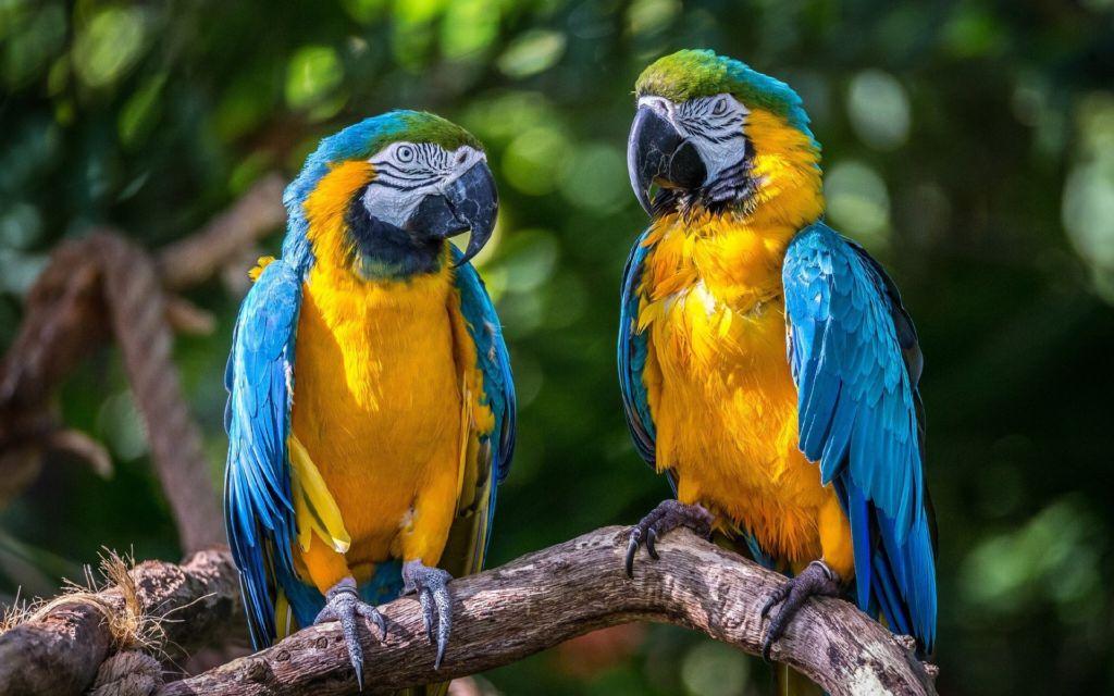 Из-за нелегальной продажи птиц большая часть попугаев погибают при транспортировке