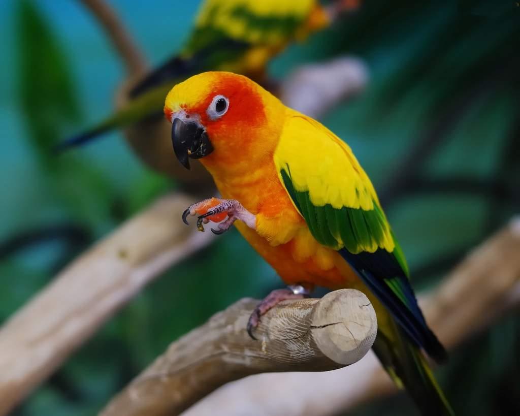 Аратинга (Aratinga) – это невероятно веселая, позитивная и дружелюбная птичка