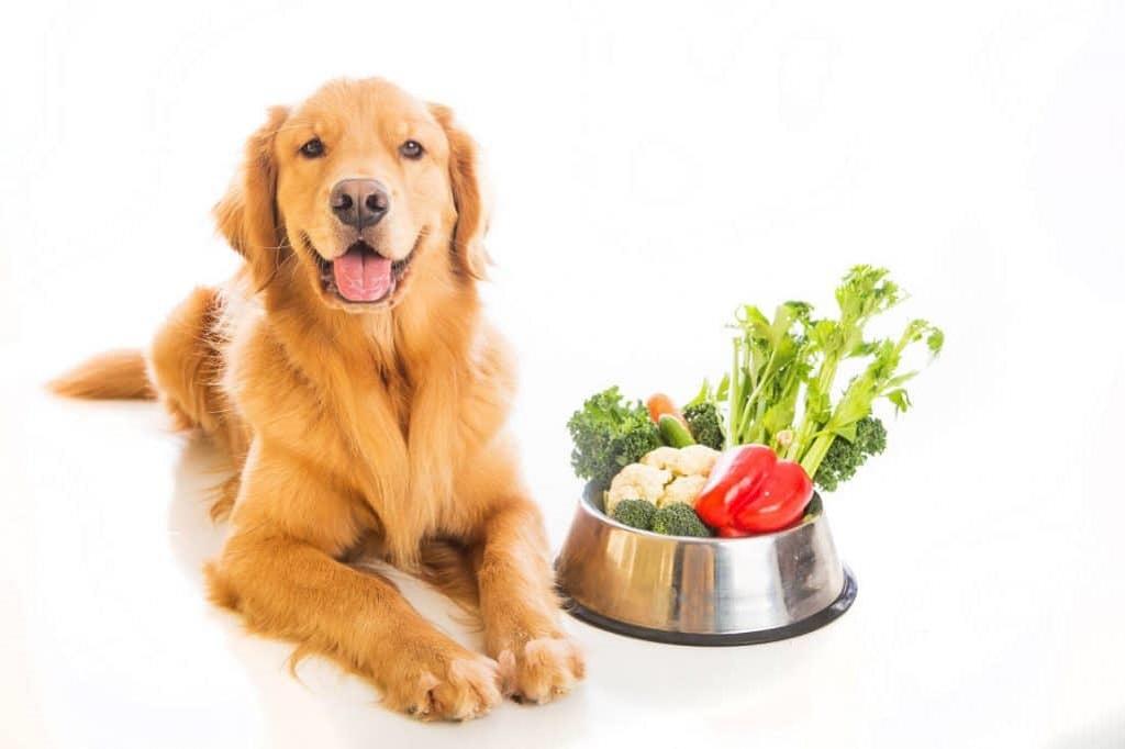 Что такое говяжий рубец и как правильно давать его собаке