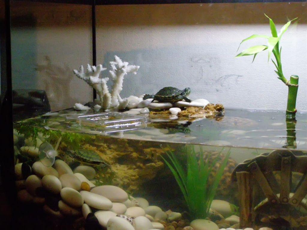 Как в аквариуме сделать островок для черепахи своими руками фото 653