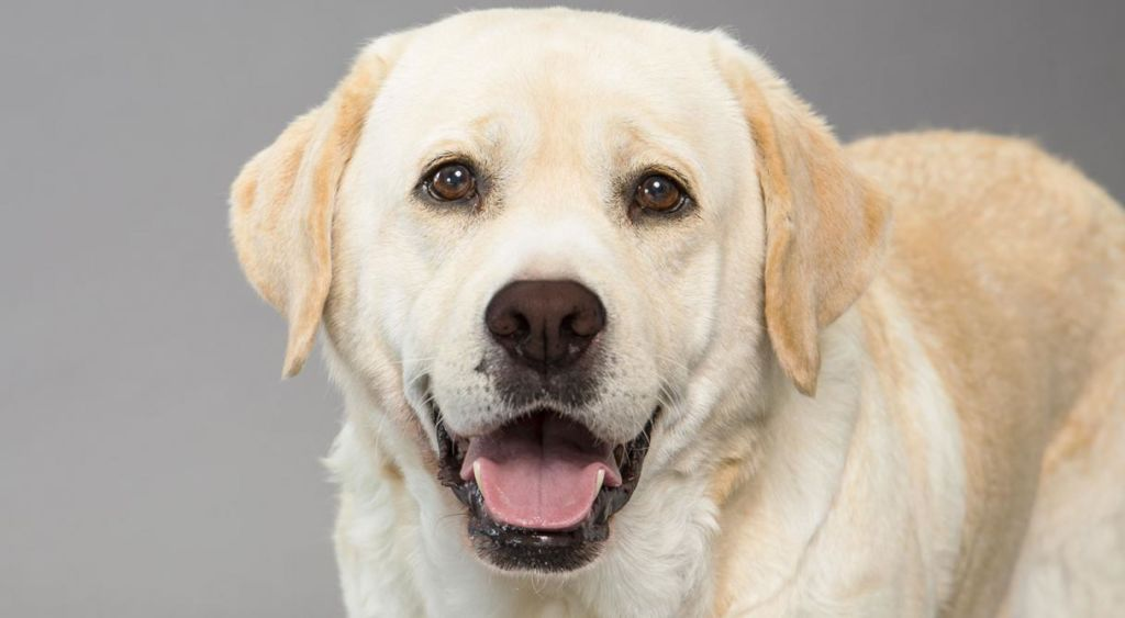 12 лучших охотничьих пород собак