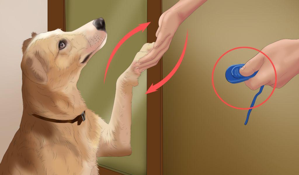 Что такое кликер для собак и как правильно пользоваться