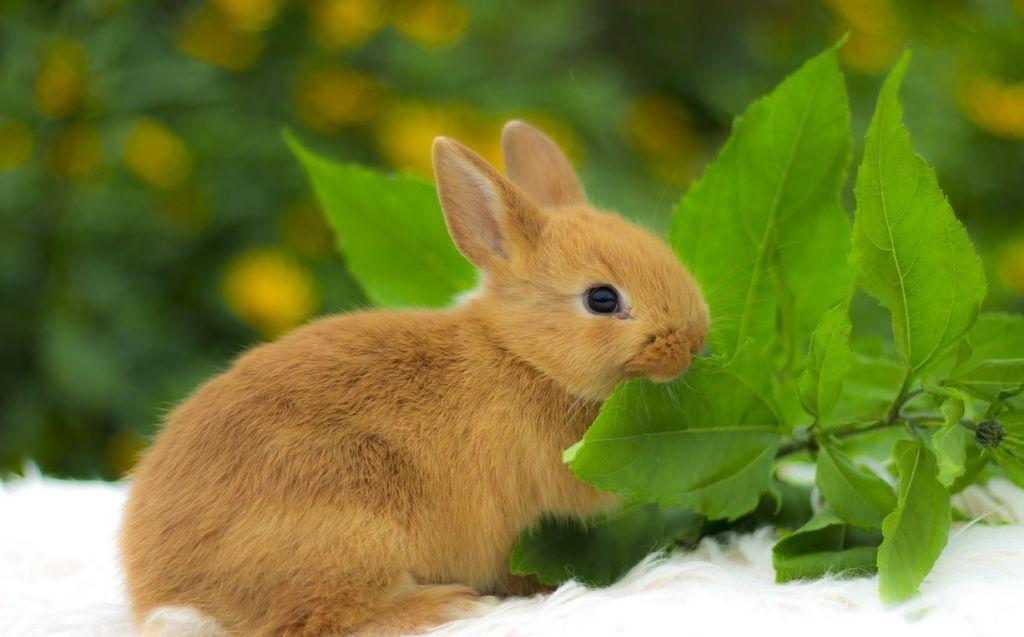 10 видов короткошерстных и длинношерстных декоративных кроликов