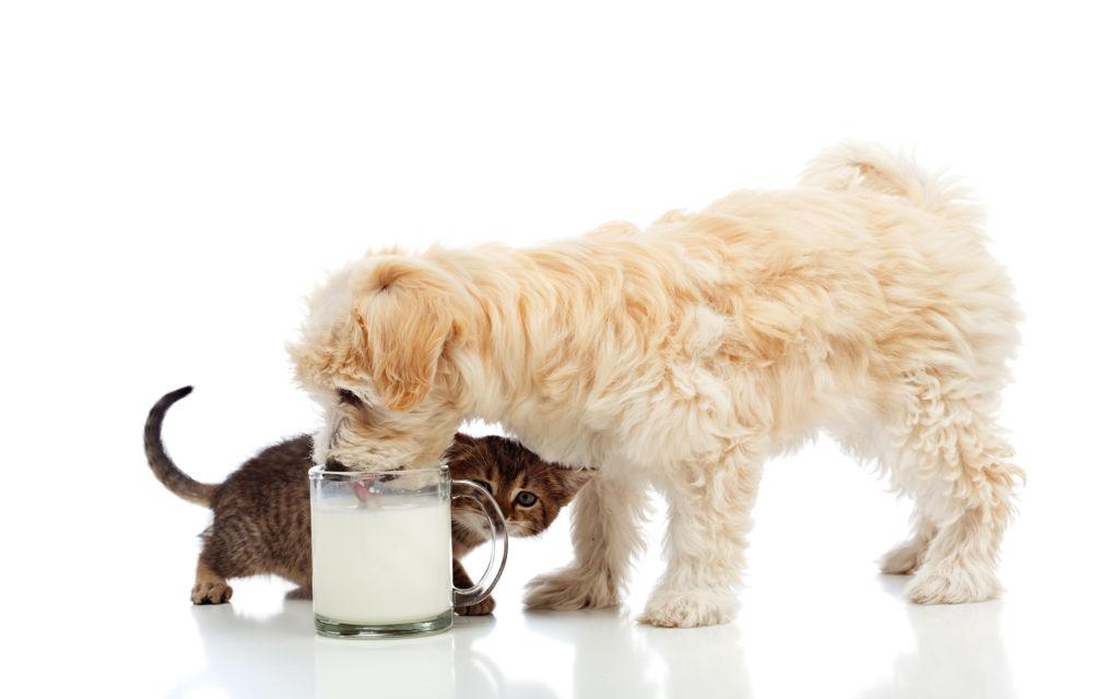 Молочные и кисломолочные продукты очень полезны для организма собаки