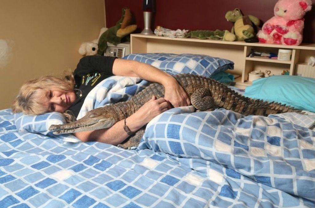 Содержать крупного крокодила дома сложно, поэтому, обычно выбирают кайманов