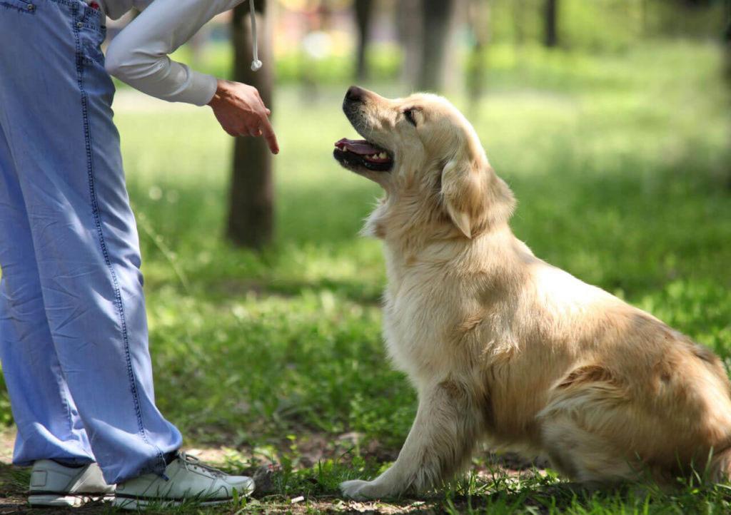 Собака должна обладать определенным нравом и врожденными данными, что бы стать охранником частного дома