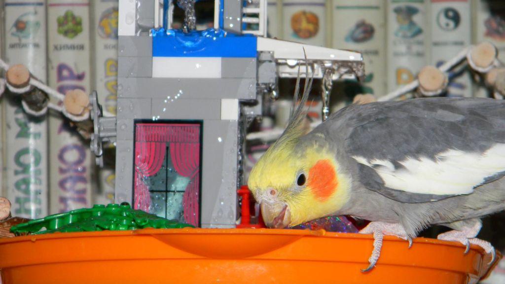 Купалка для попугая или как купать волнистых попугаев в домашних условиях