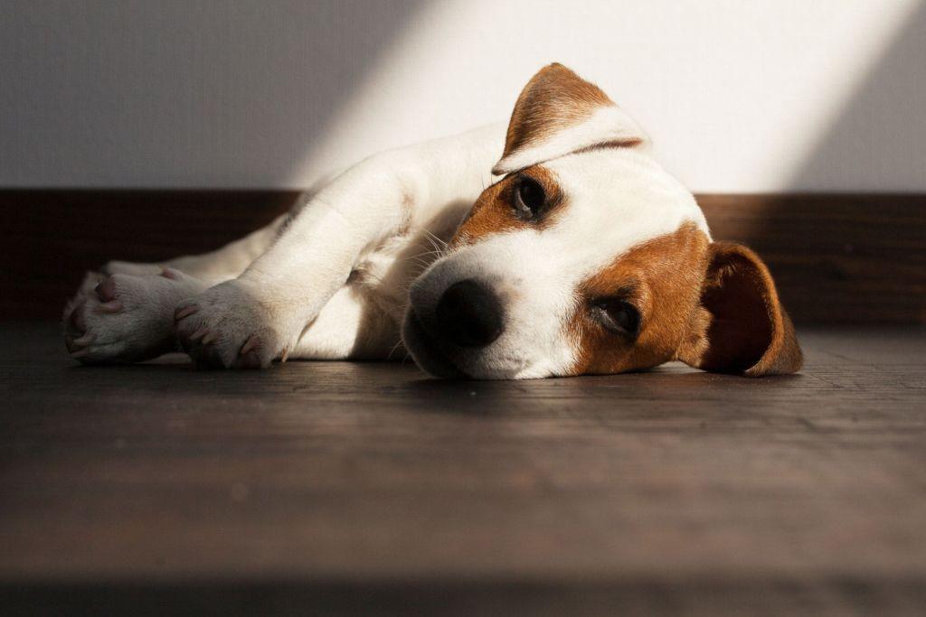 14 причин, почему собака не пьет воду