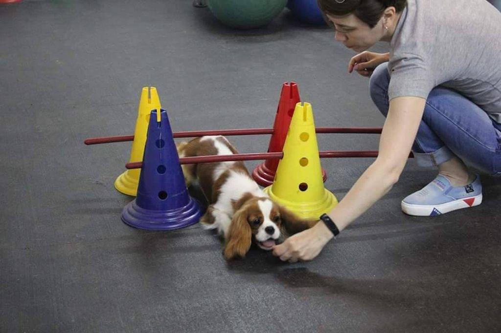 Лучшие упражнения для укрепления мышц спины и задних лап у собаки