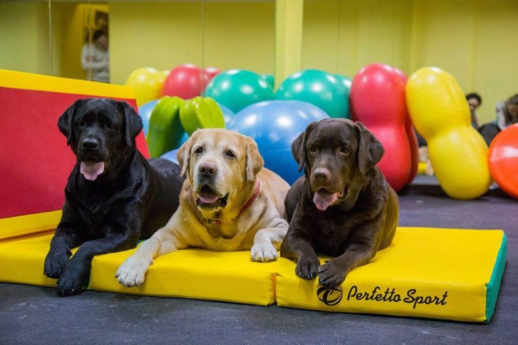 Перед началом тренировок обязательно нужна консультация с ветеринаром