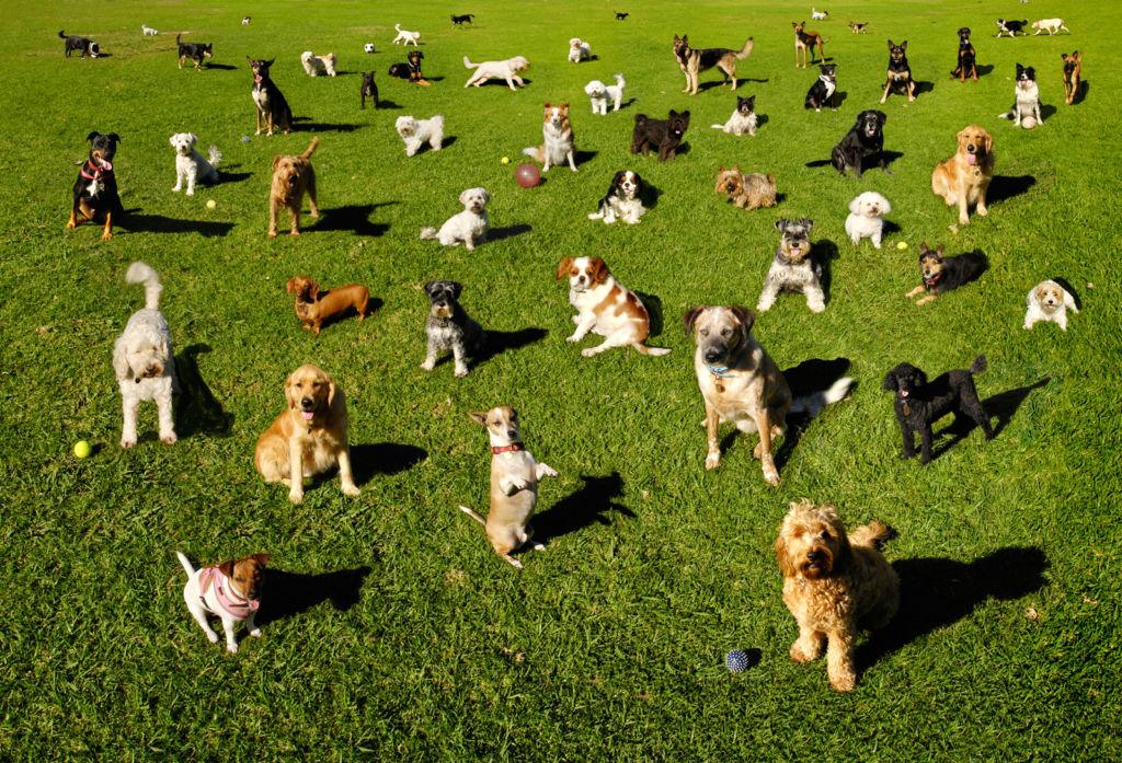 Перед заведением собаки нужно определиться для чего она будет нужна