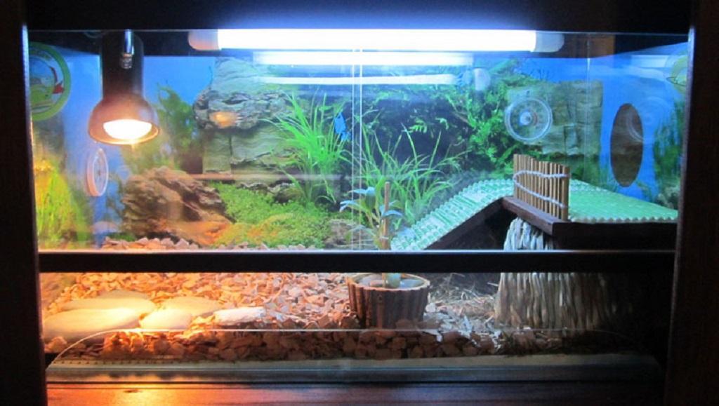 купить ультрафиолетовую лампу для черепахи