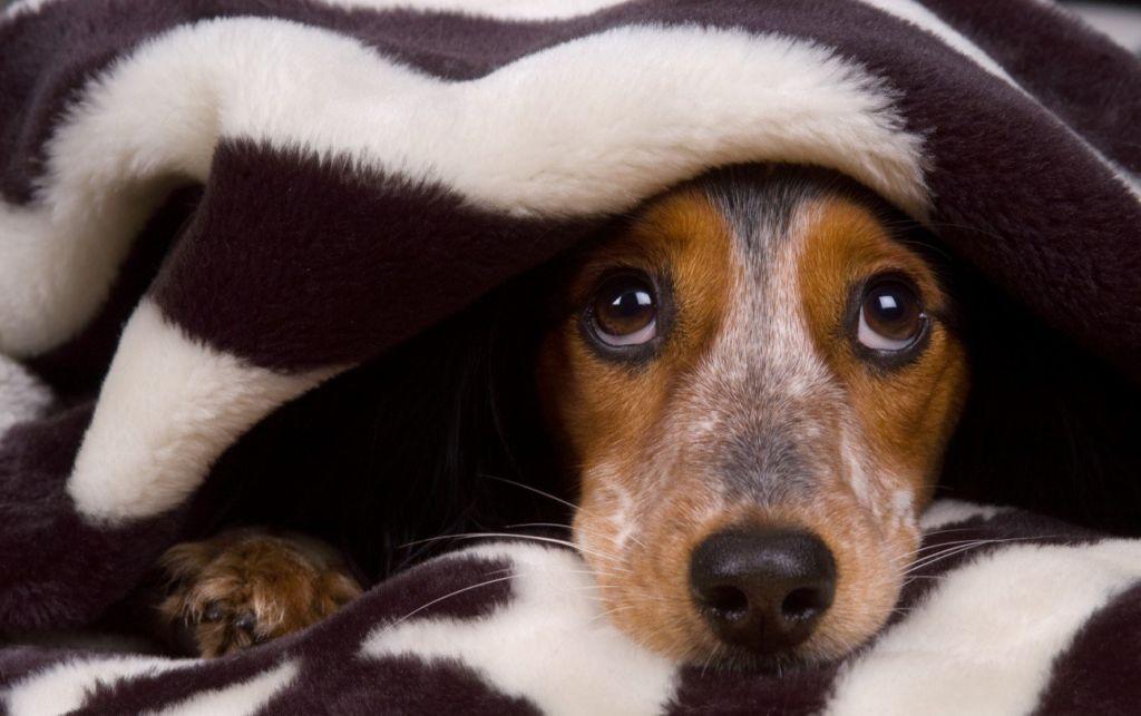 На самом деле, собаки способны видеть в 3–4 раза лучше любого человека