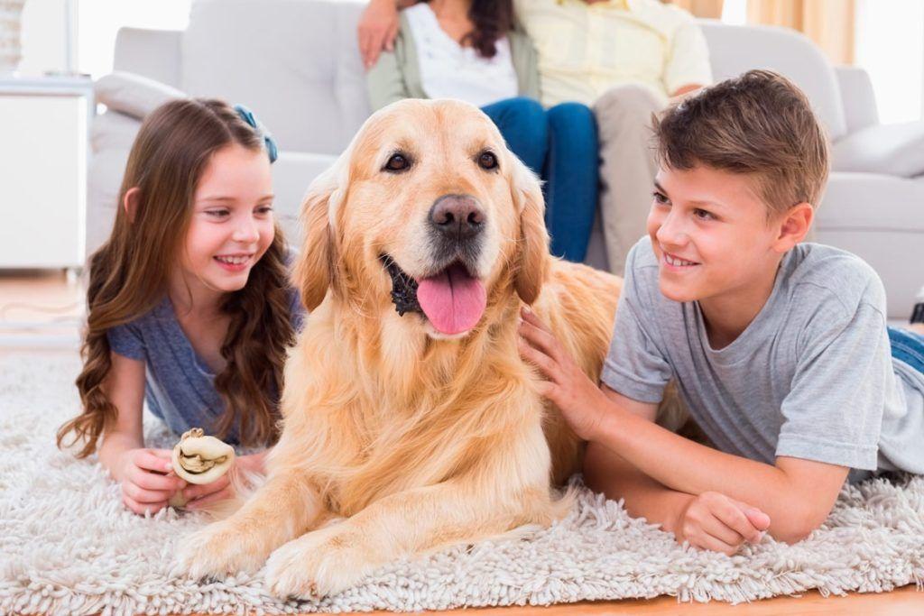 Список 25 самых лучших пород собак-компаньонов