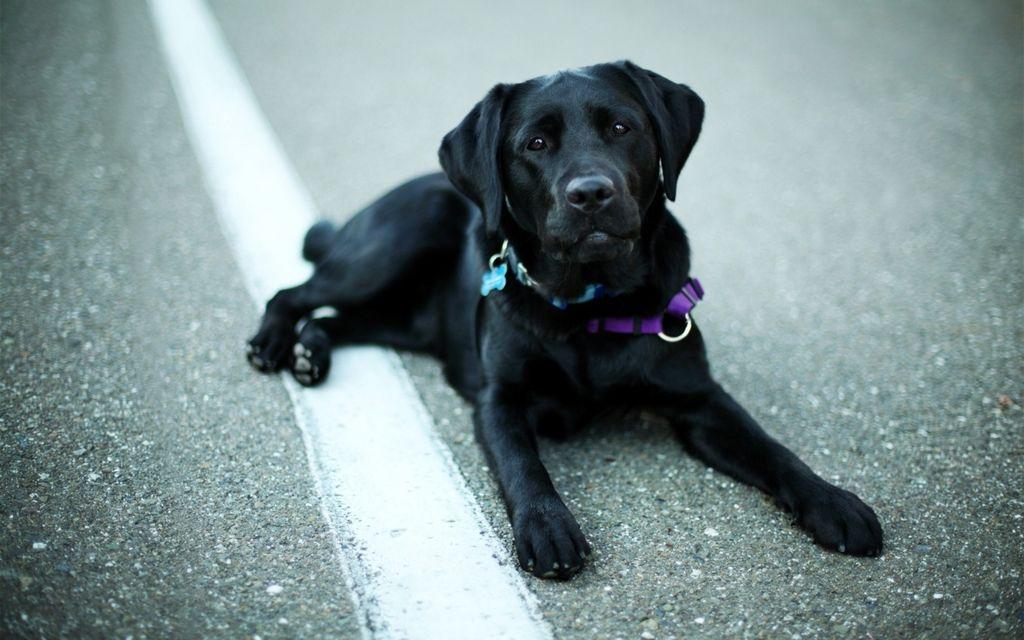 Различить смесь от породистого пса можно по внешним данным