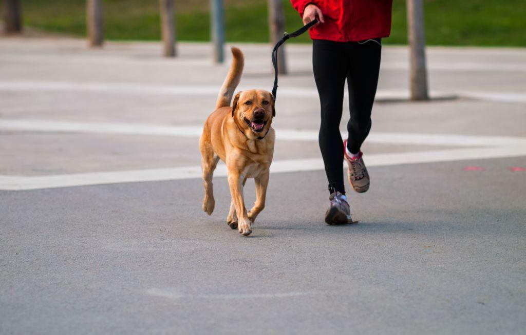 Дрессировка собаки —как научить собаку командам сидеть, лежать, команде апорт, фас и фу