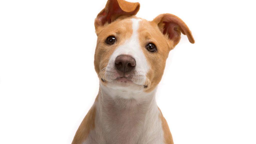 6 причин, почему собака хрюкает и что делать