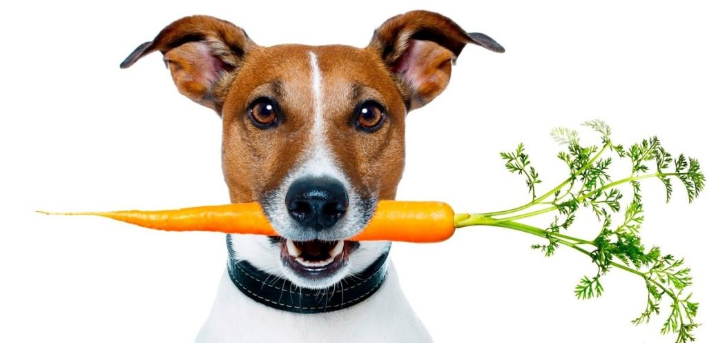 Любой пес предпочтет морковке — мясо, а капусте — творог