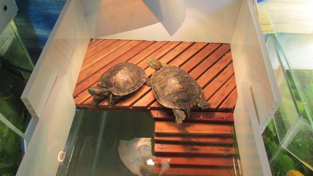 Как в аквариуме сделать островок для черепахи своими руками фото 664