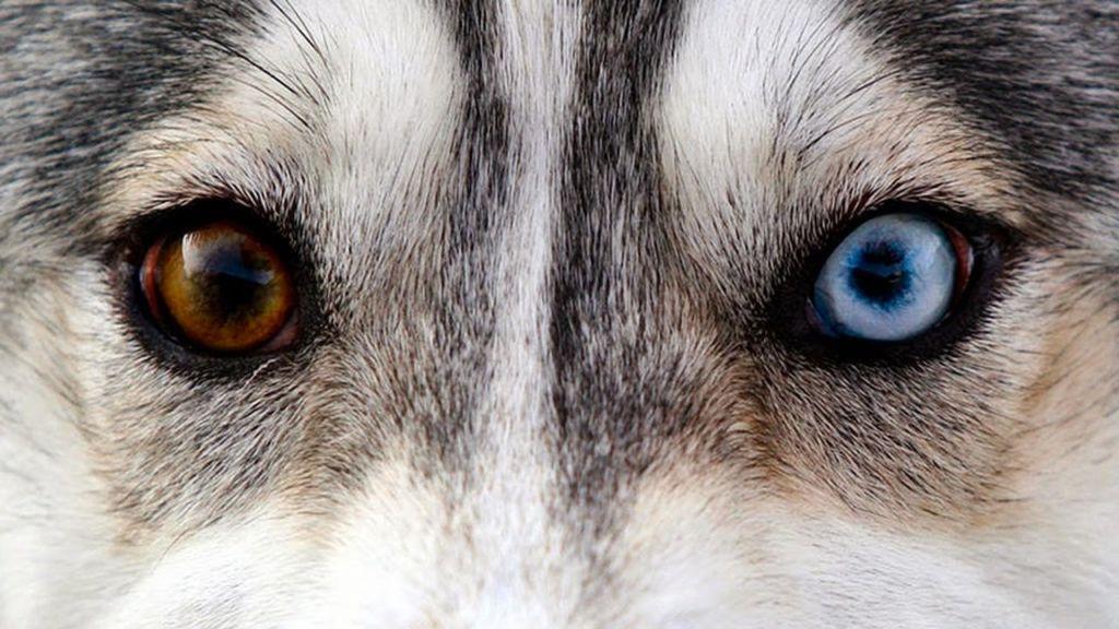 Каждый оттенок глаза накладывает отпечаток на выражение мордочки
