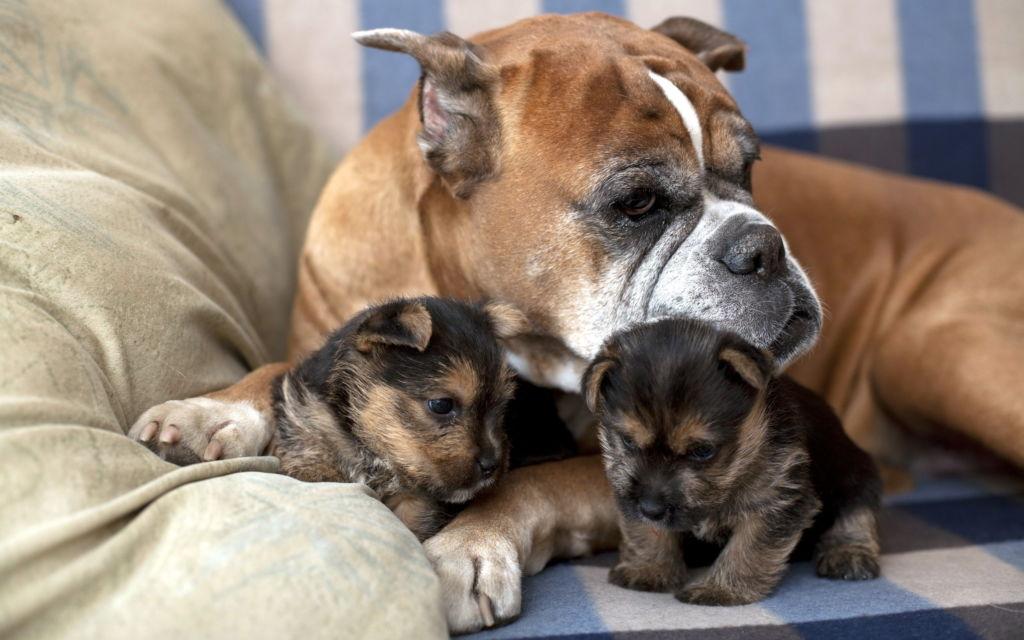 Витамины и добавки для собак крупных и мелких пород