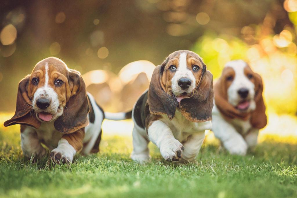 Как проявляется аллергия на собак, симптомы и лечение препаратами