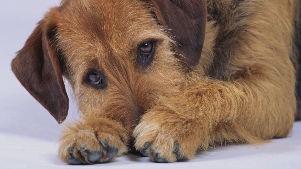 Почему собака ест свой кал и что делать