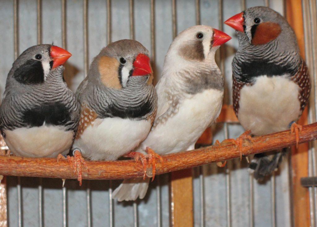 Создать оптимальные условия для обитания птичек в неволе – задача не из простых