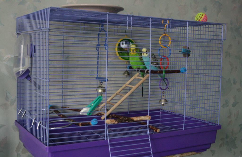 Попугаям необходимо уделять много внимания