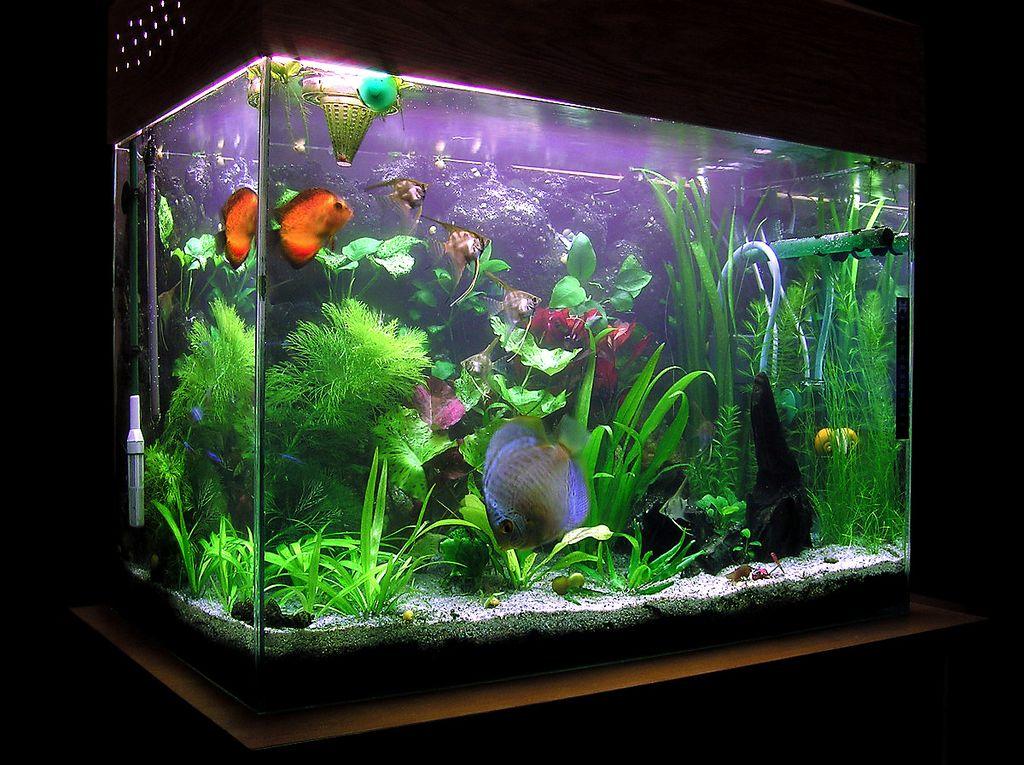 Что делать, если потек аквариум