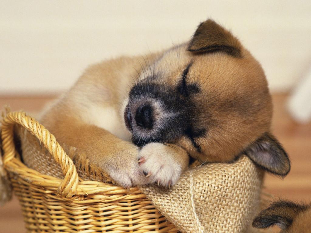 Алиментный щенок — что это такое и что это значит