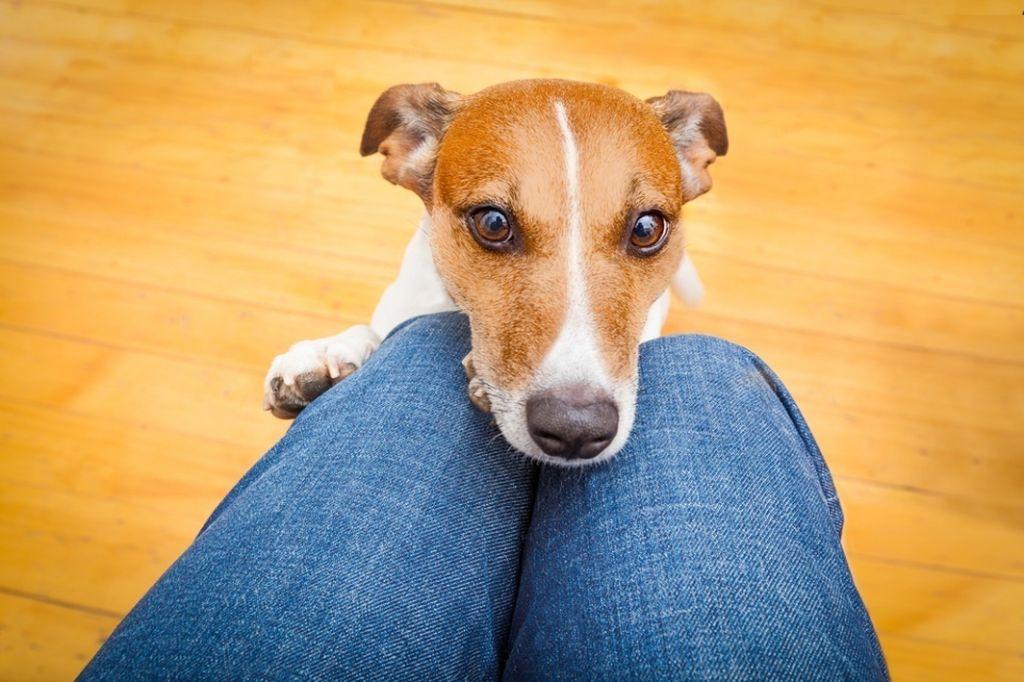 Помимо голоса собаки задействуют для общения язык тела