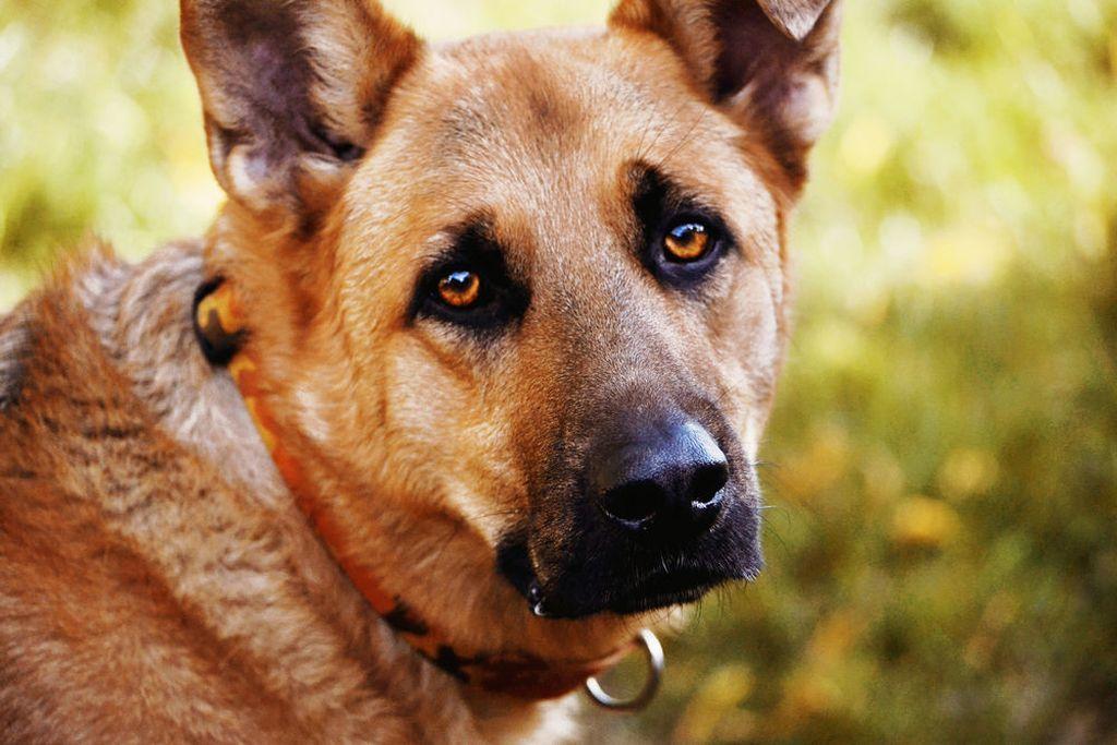 Собаки способны разговаривать и выражать чувства глазами