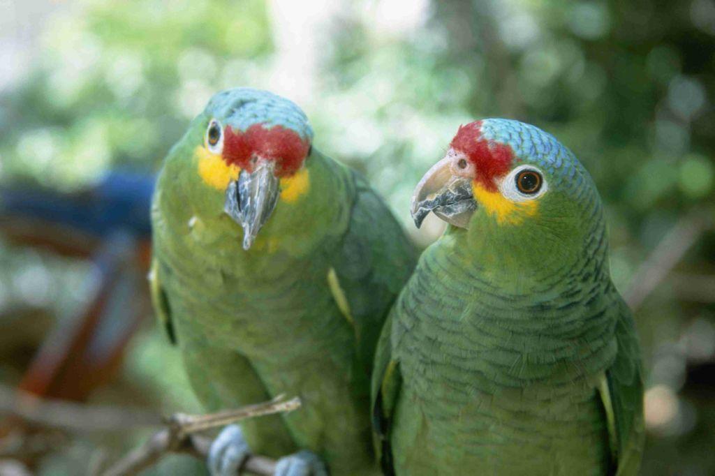Крик - это нормальный инструмент общения птиц