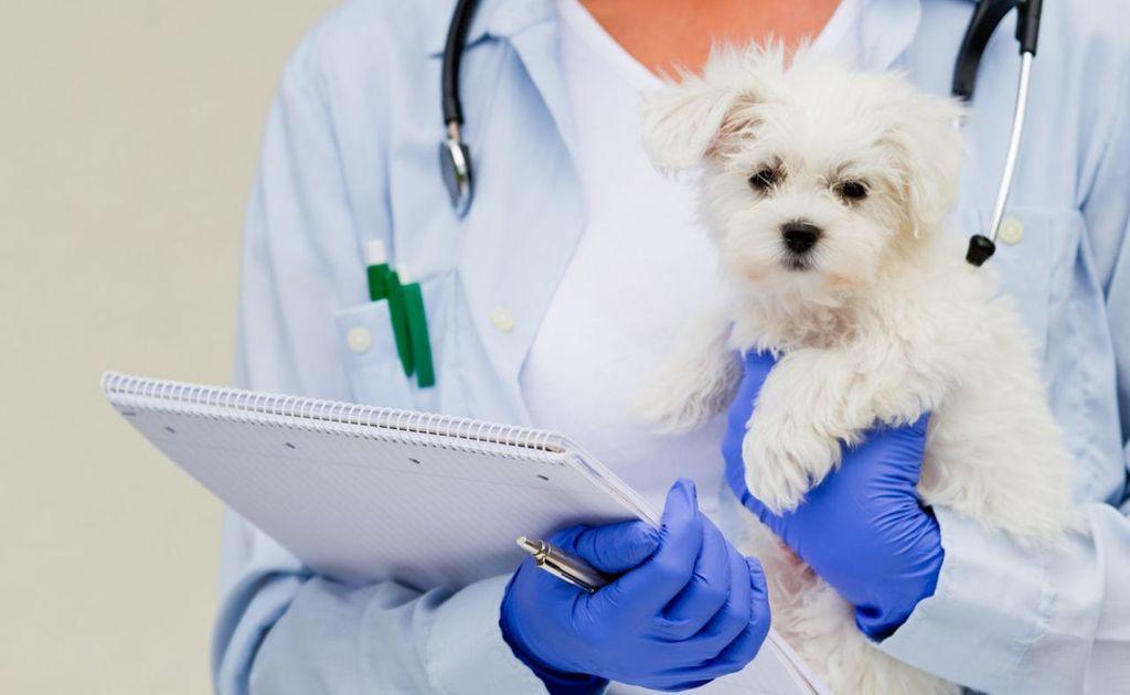 При отсутствии аппетита у щенка необходимо обратиться к ветеринару
